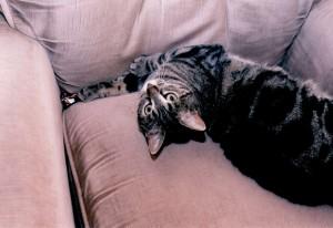 Mimi on armchair 2(1)