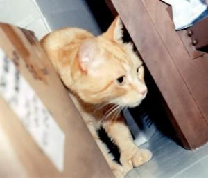 Jerome peeking out