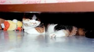 Patty under bed