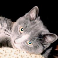 KittenKitten