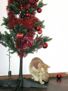 Rocco_and_Christmas_Tree_6999 (1).JPGBy Alvimann